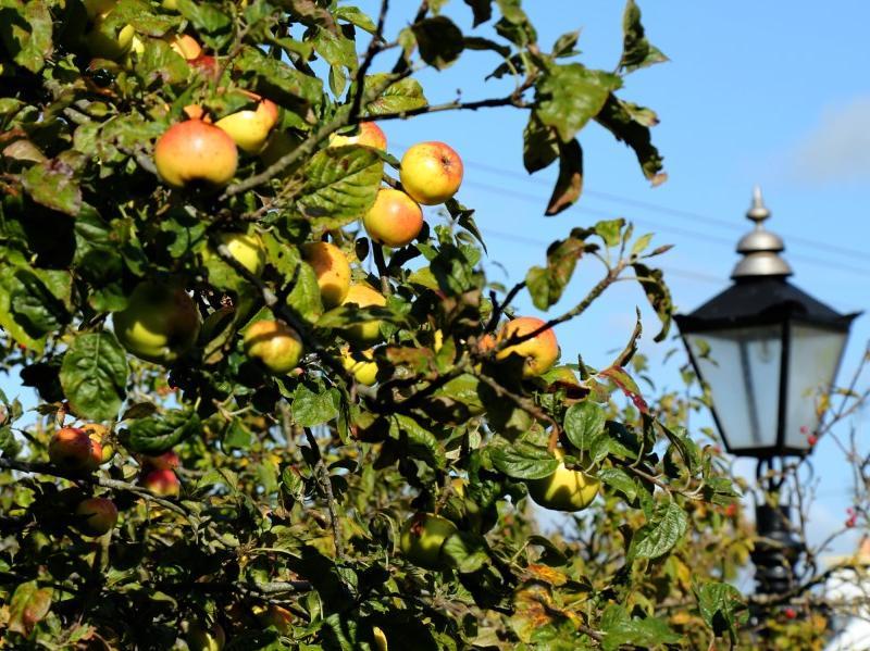 kilmuckridge-holiday-homes-wexford-private-gated-complex (9)